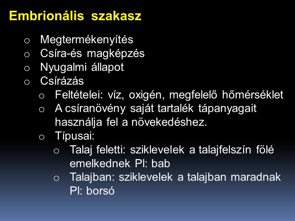 Embrionális szakasz Megtermékenyítés Csíra-és magképzés