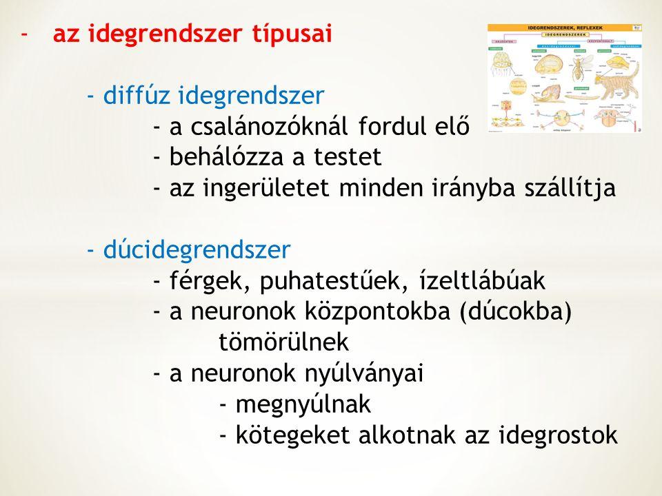 az idegrendszer típusai