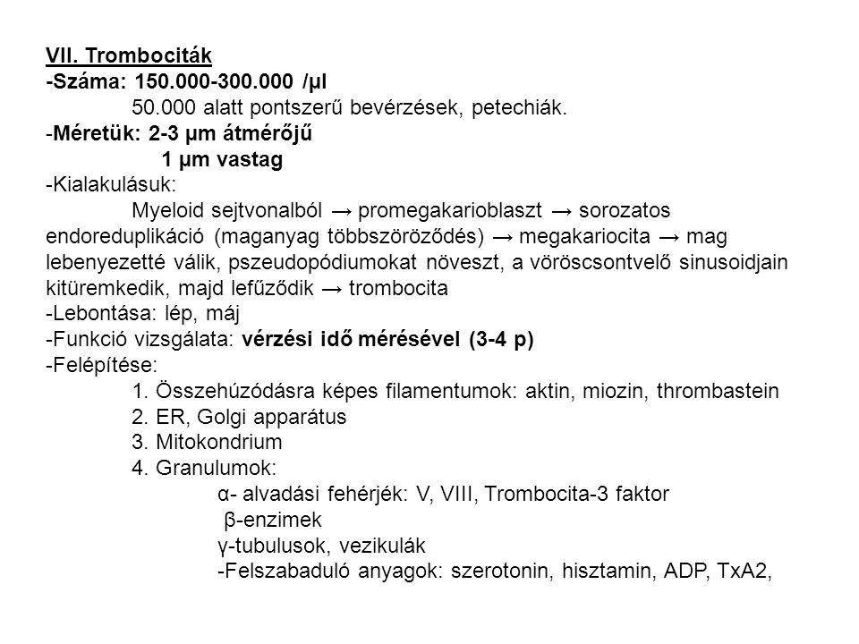 VII. Trombociták -Száma: 150.000-300.000 /µl. 50.000 alatt pontszerű bevérzések, petechiák. -Méretük: 2-3 µm átmérőjű.