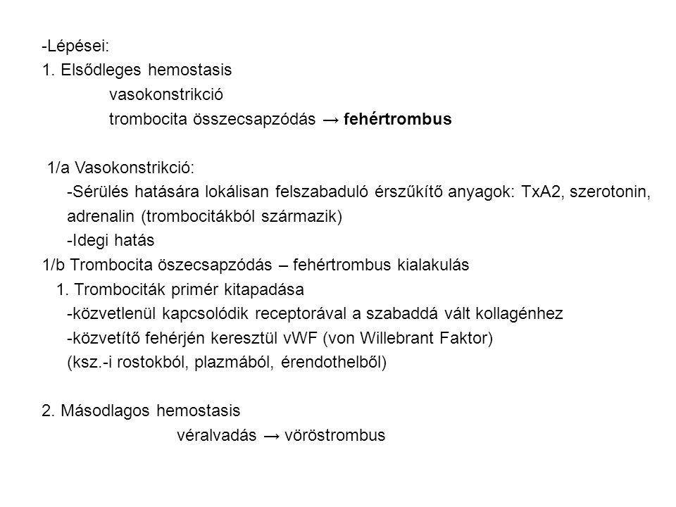 -Lépései: 1. Elsődleges hemostasis. vasokonstrikció. trombocita összecsapzódás → fehértrombus. 1/a Vasokonstrikció: