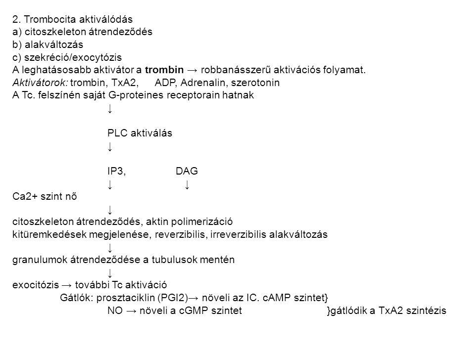 2. Trombocita aktiválódás