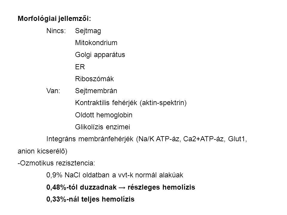 Morfológiai jellemzői: