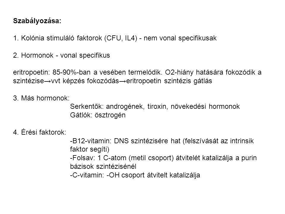 Szabályozása: 1. Kolónia stimuláló faktorok (CFU, IL4) - nem vonal specifikusak. 2. Hormonok - vonal specifikus.