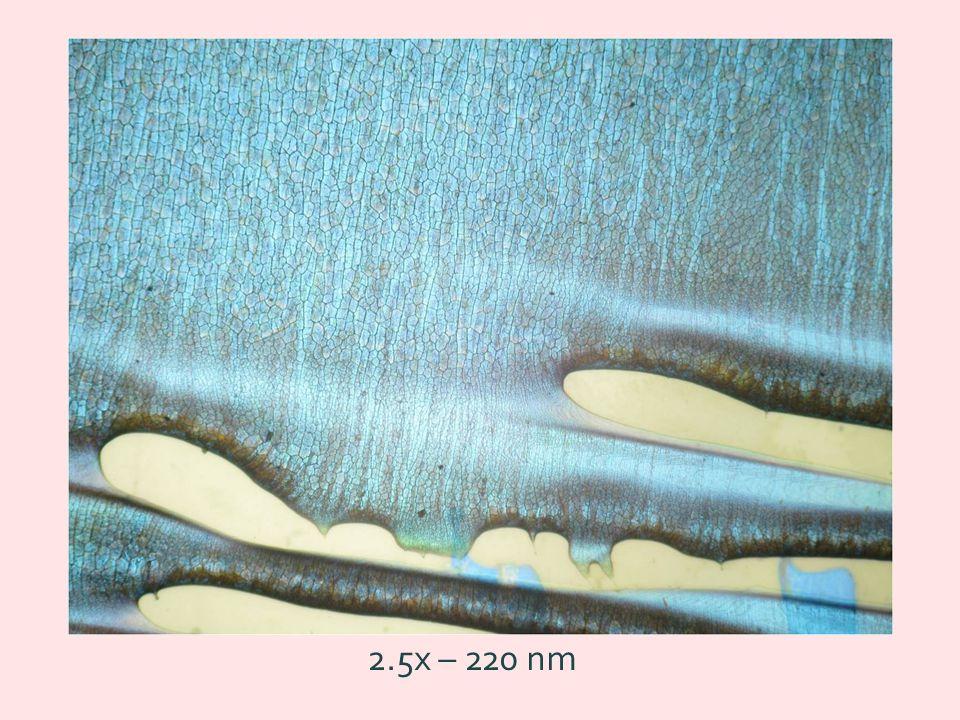 2.5x – 220 nm