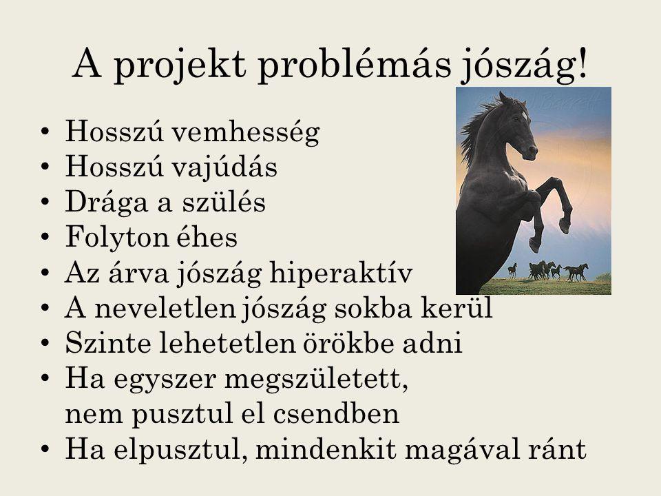 A projekt problémás jószág!