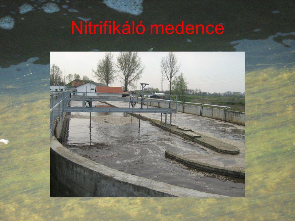 Nitrifikáló medence
