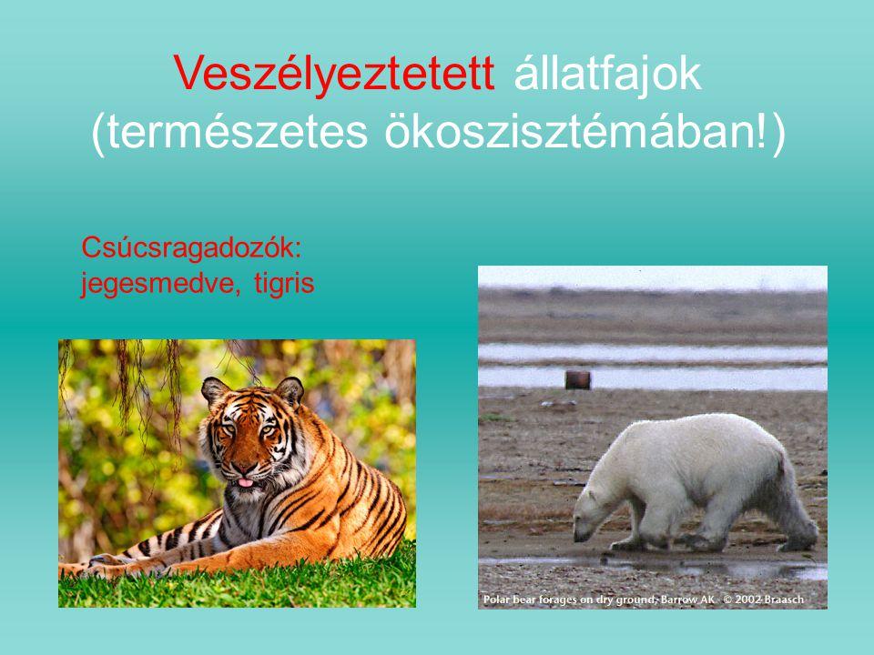 Veszélyeztetett állatfajok (természetes ökoszisztémában!)