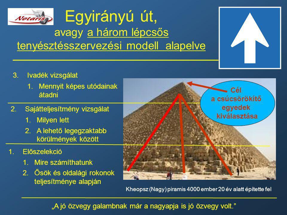 Egyirányú út, avagy a három lépcsős tenyésztésszervezési modell alapelve
