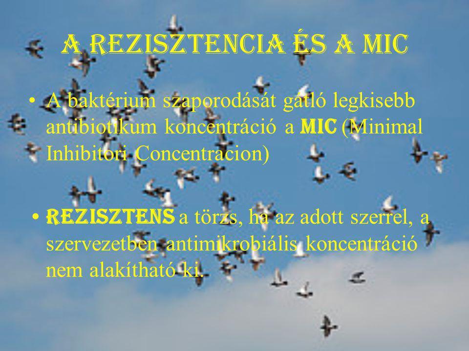 A rezisztencia és a MIC A baktérium szaporodását gátló legkisebb antibiotikum koncentráció a MIC (Minimal Inhibitori Concentracion)