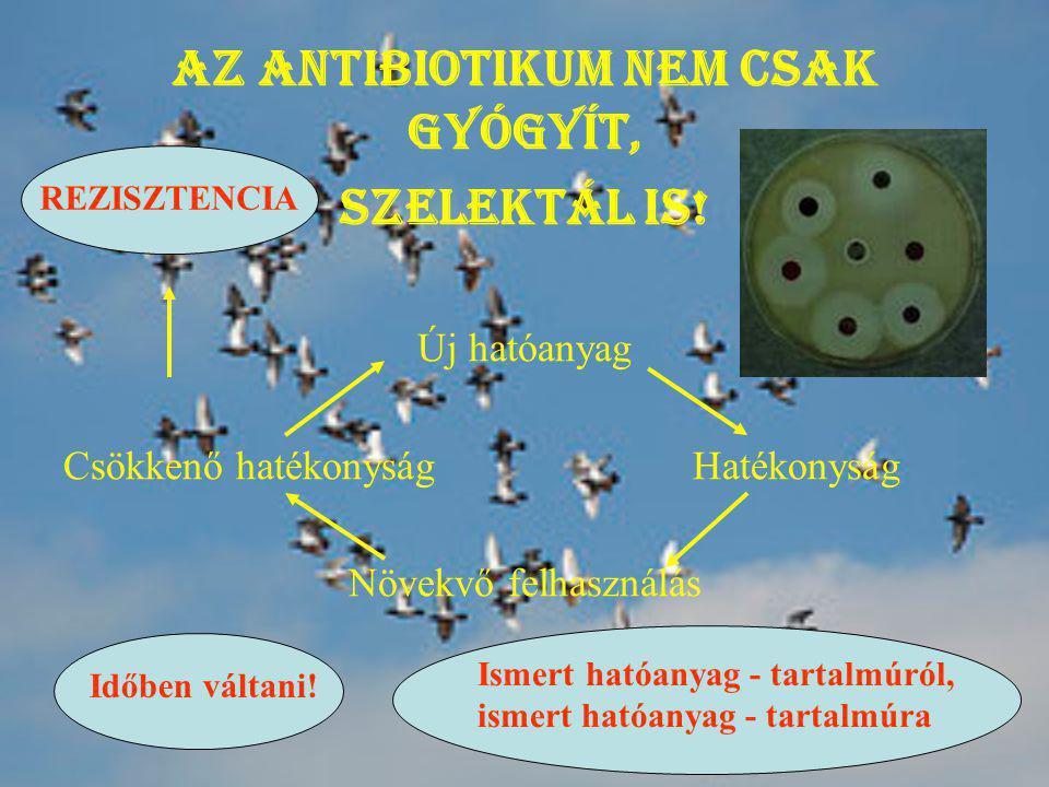 Az antibiotikum nem csak gyógyít,