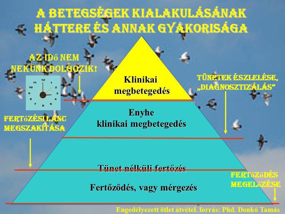 A betegségek kialakulásának háttere és annak gyakorisága