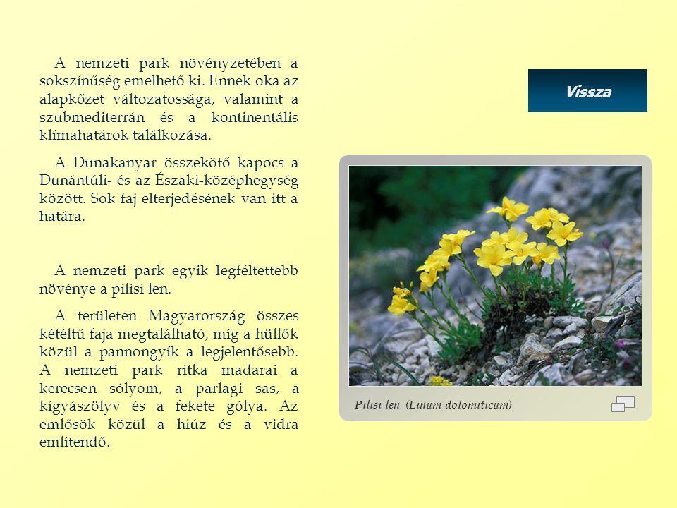 A nemzeti park egyik legféltettebb növénye a pilisi len.