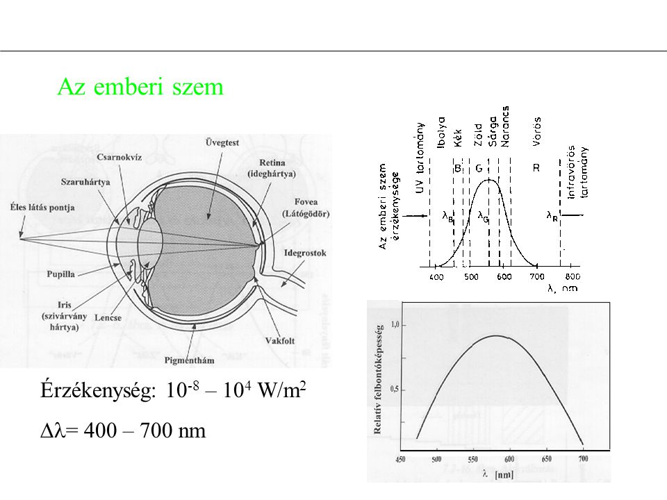 Az emberi szem Érzékenység: 10-8 – 104 W/m2 = 400 – 700 nm