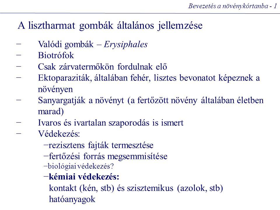 A lisztharmat gombák általános jellemzése