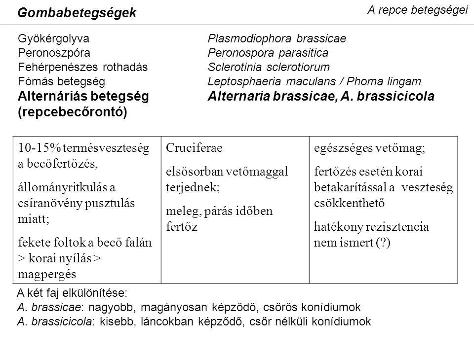 Alternáriás betegség Alternaria brassicae, A. brassicicola