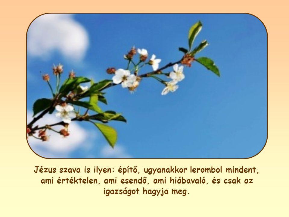 Jézus szava is ilyen: építő, ugyanakkor lerombol mindent, ami értéktelen, ami esendő, ami hiábavaló, és csak az igazságot hagyja meg.