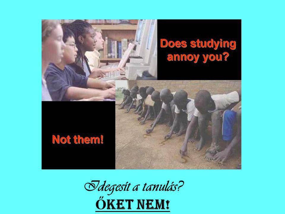 Idegesít a tanulás ŐKET NEM!