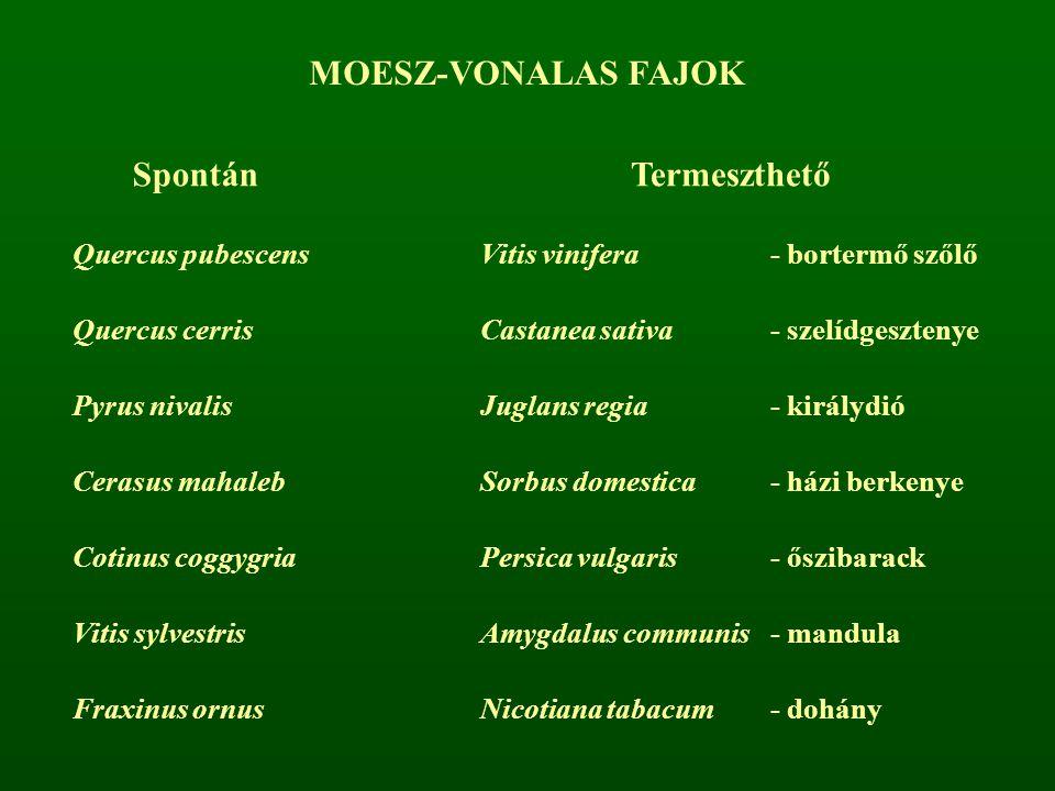 MOESZ-VONALAS FAJOK Spontán Termeszthető