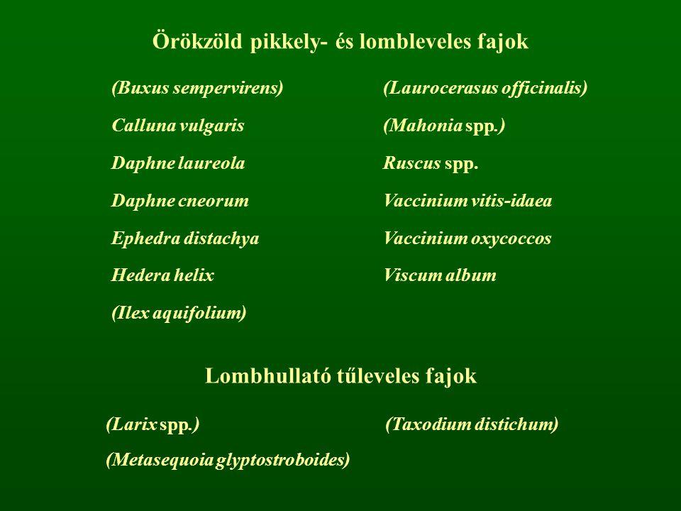 Örökzöld pikkely- és lombleveles fajok Lombhullató tűleveles fajok