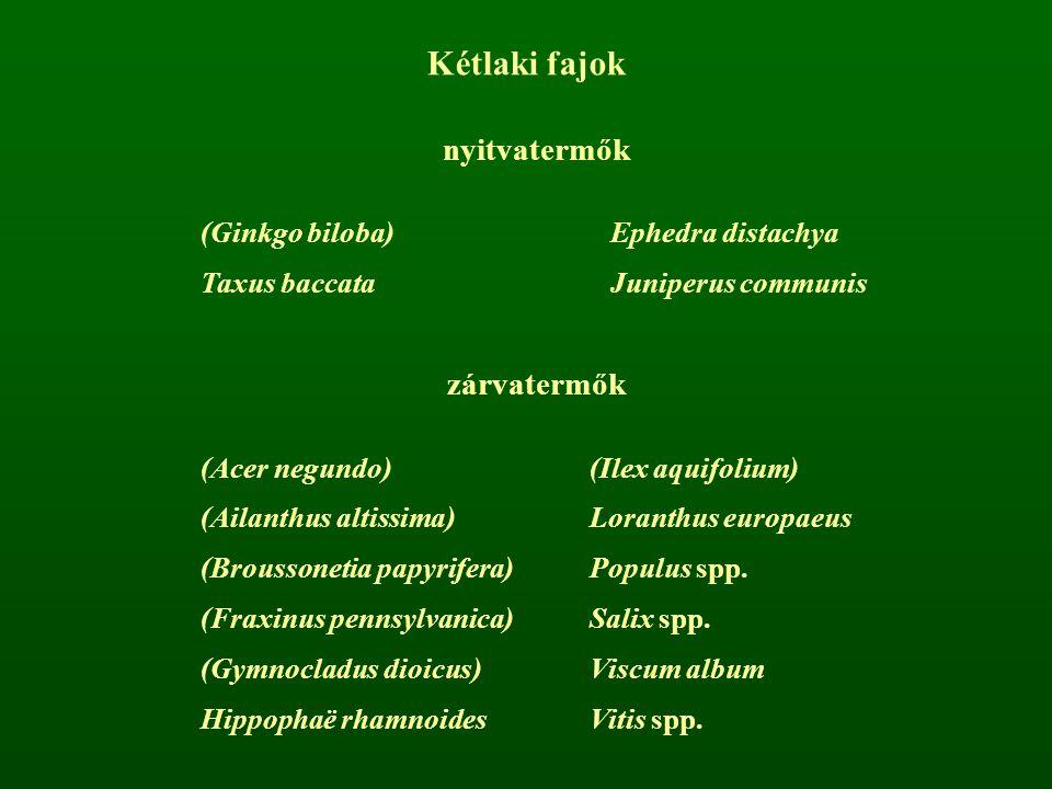 Kétlaki fajok nyitvatermők zárvatermők (Ginkgo biloba)