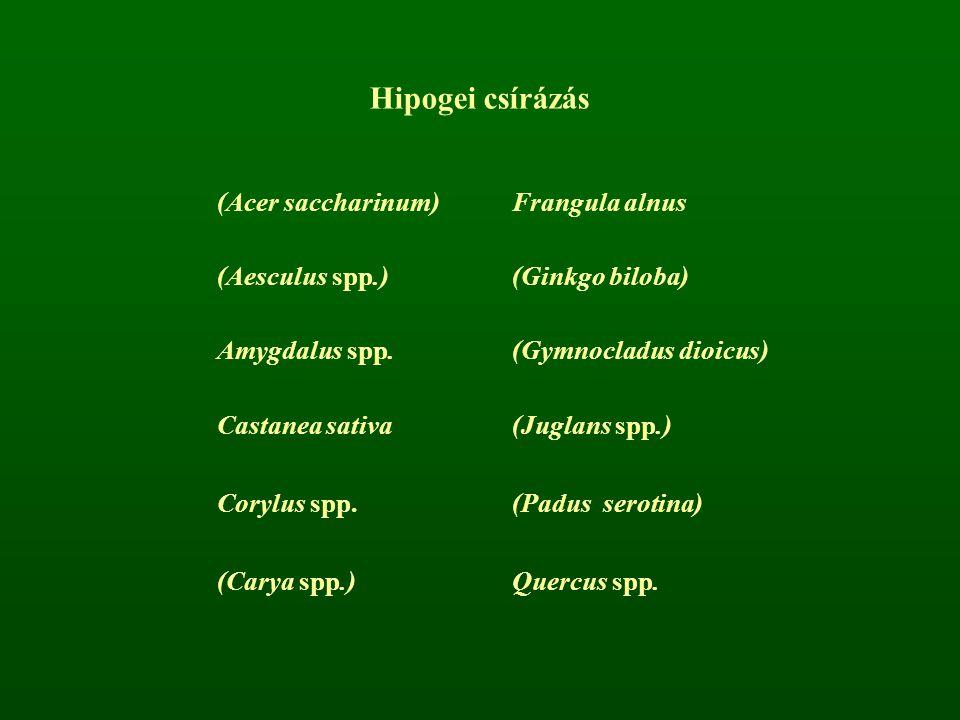 Hipogei csírázás (Acer saccharinum) Frangula alnus (Aesculus spp.)