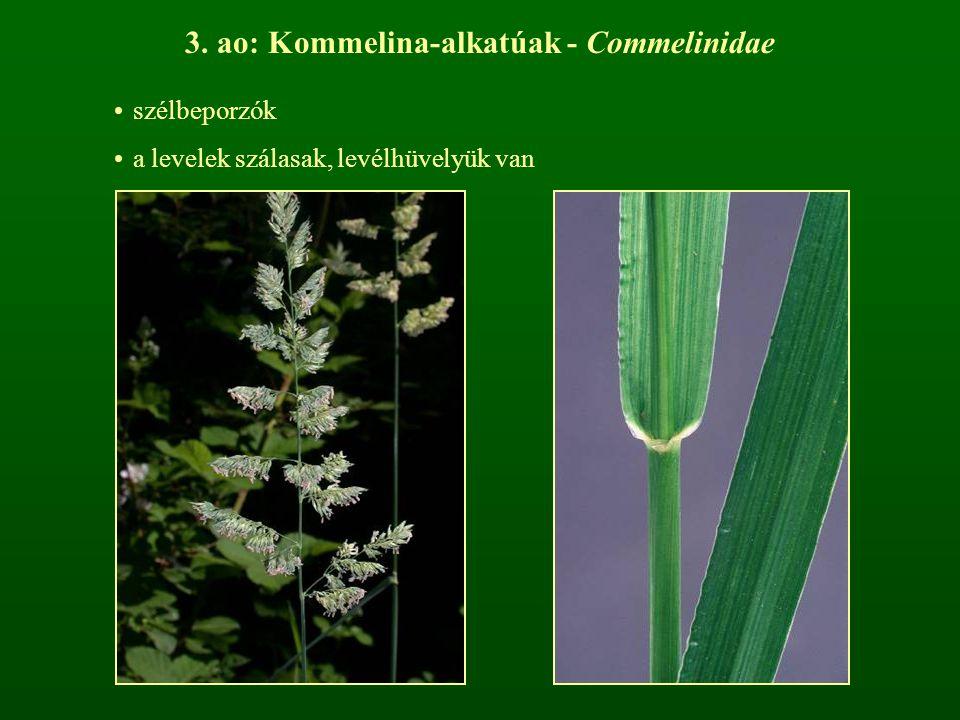 3. ao: Kommelina-alkatúak - Commelinidae