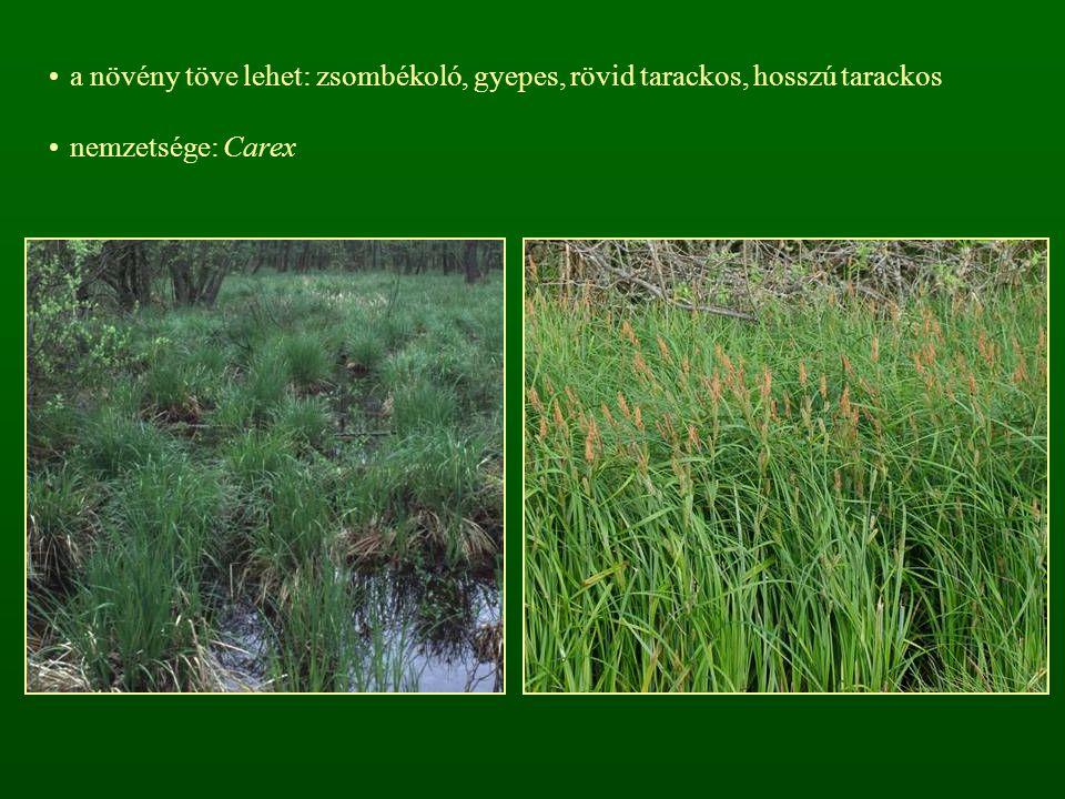 a növény töve lehet: zsombékoló, gyepes, rövid tarackos, hosszú tarackos
