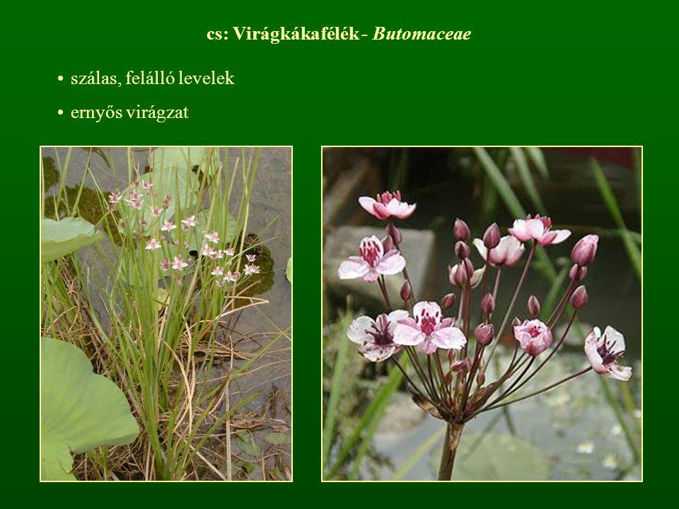 cs: Virágkákafélék - Butomaceae