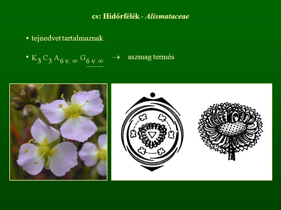cs: Hídőrfélék - Alismataceae