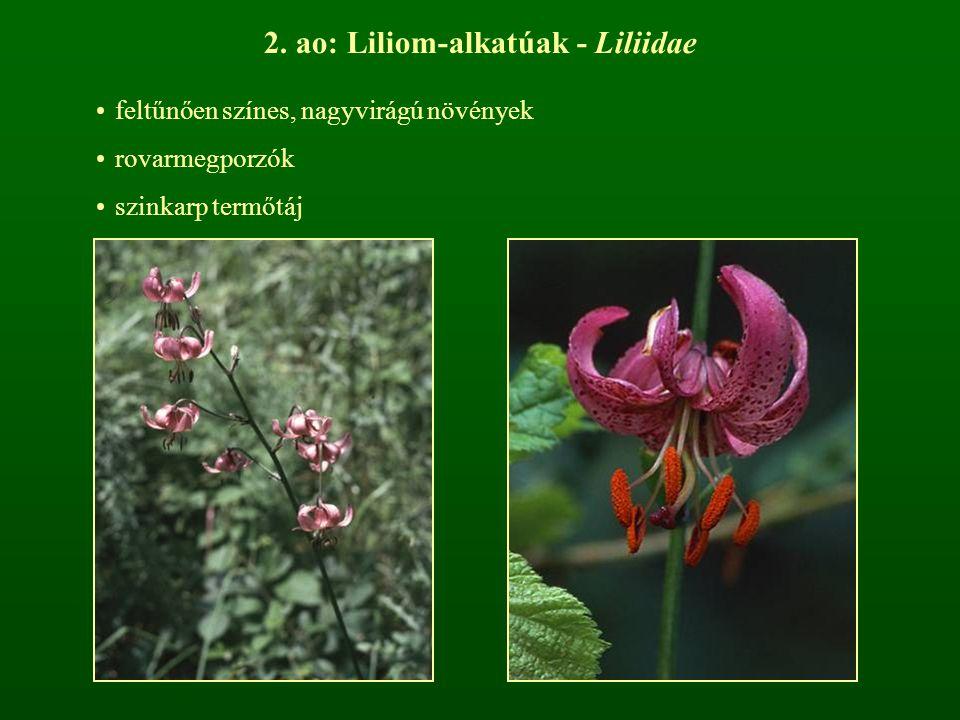 2. ao: Liliom-alkatúak - Liliidae
