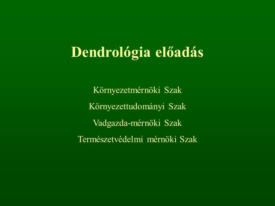 Dendrológia előadás Környezetmérnöki Szak Környezettudományi Szak