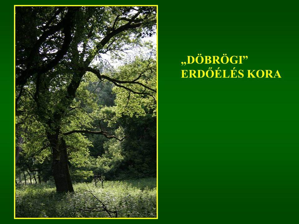 """""""DÖBRÖGI ERDŐÉLÉS KORA"""