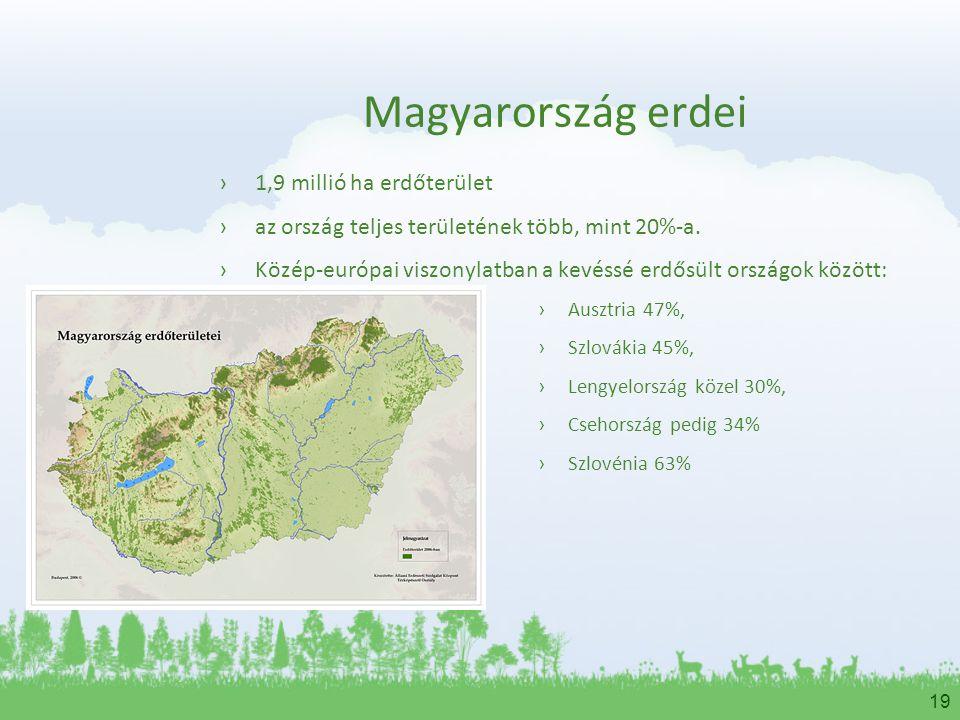 Magyarország erdei 1,9 millió ha erdőterület