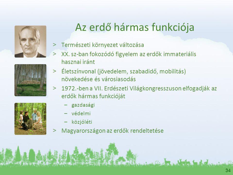 Az erdő hármas funkciója