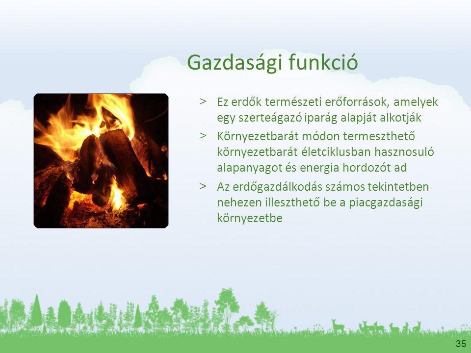 Gazdasági funkció Ez erdők természeti erőforrások, amelyek egy szerteágazó iparág alapját alkotják.