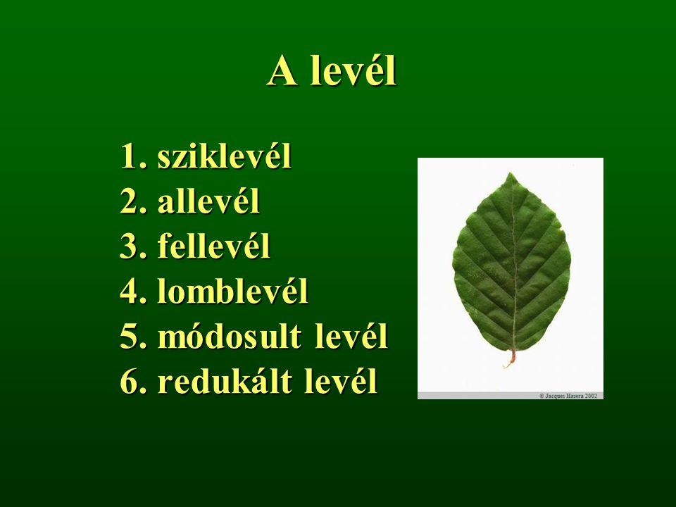 A levél 1. sziklevél 2. allevél 3. fellevél 4. lomblevél 5