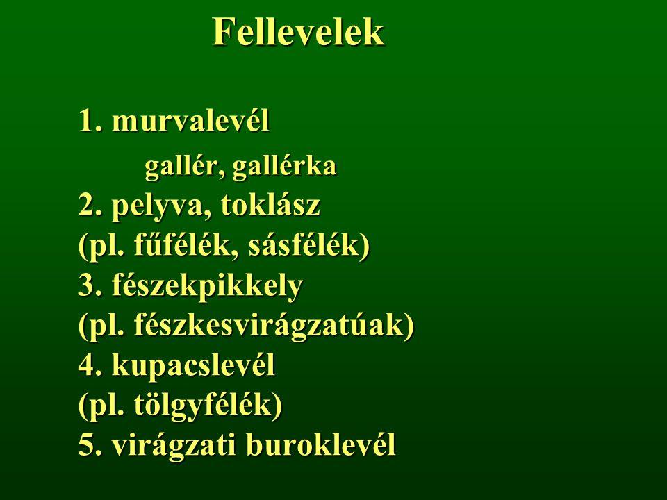 Fellevelek 1. murvalevél. gallér, gallérka 2. pelyva, toklász (pl