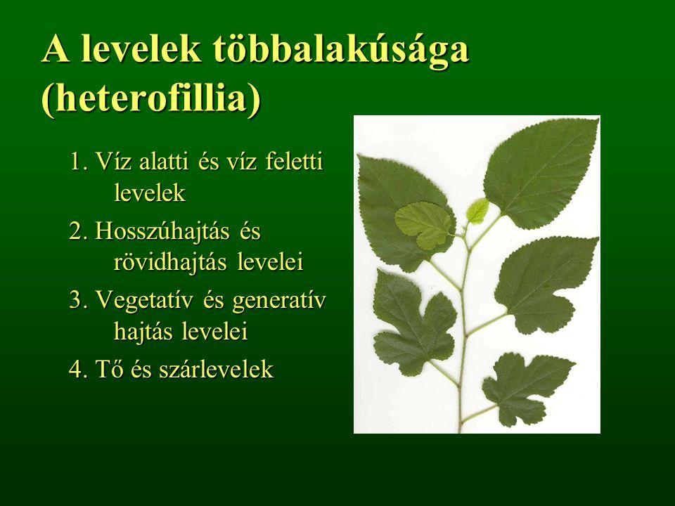 A levelek többalakúsága (heterofillia)
