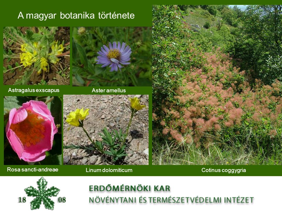 A magyar botanika története