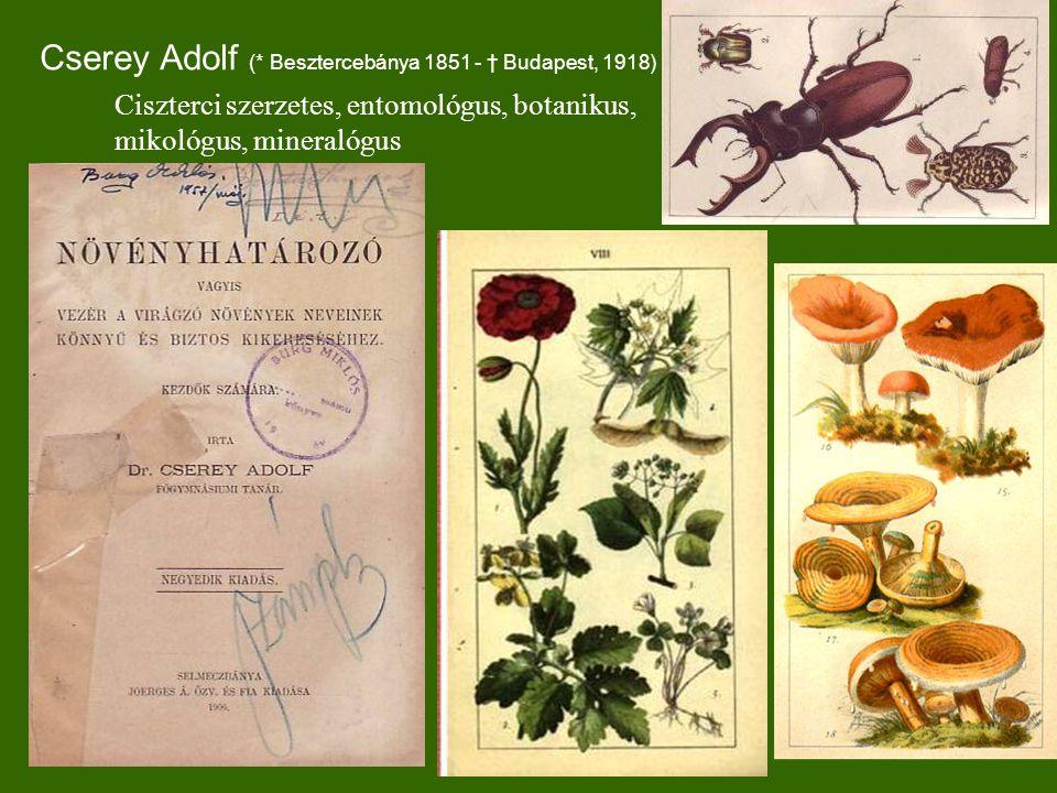 Cserey Adolf (* Besztercebánya 1851 - † Budapest, 1918)