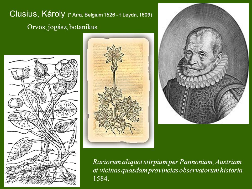 Clusius, Károly (* Arra, Belgium 1526 - † Leydn, 1609)