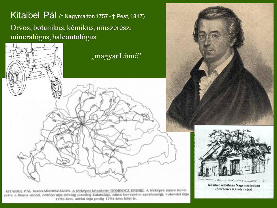 Kitaibel Pál (* Nagymarton 1757 - † Pest, 1817)