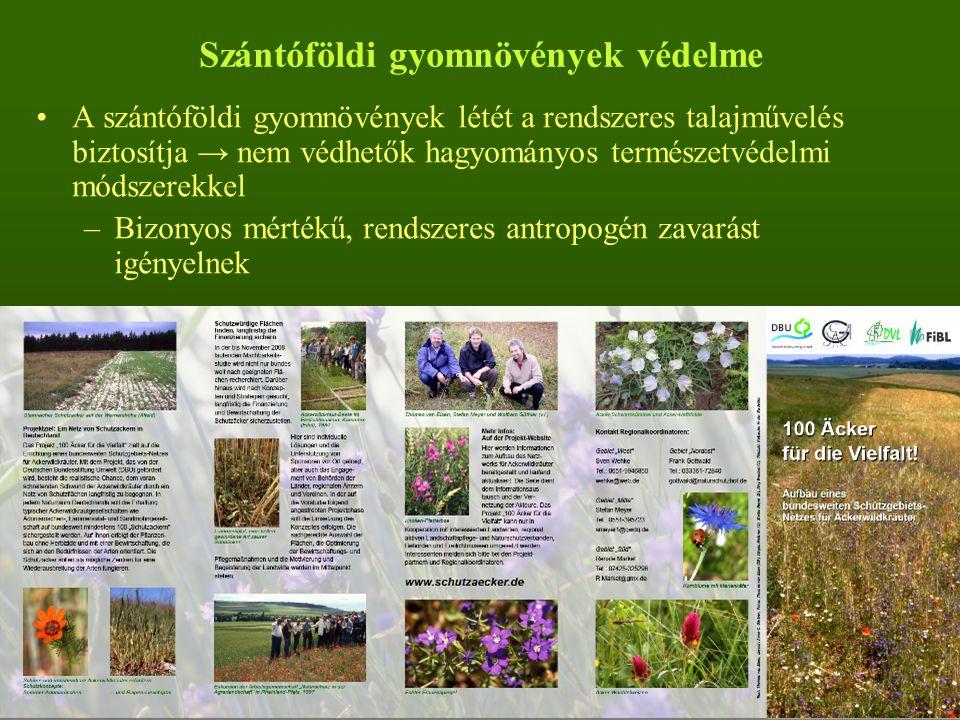 Szántóföldi gyomnövények védelme