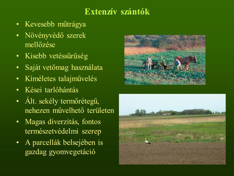 Extenzív szántók Kevesebb műtrágya Növényvédő szerek mellőzése
