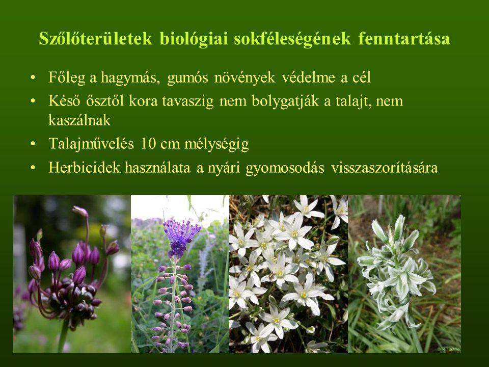 Szőlőterületek biológiai sokféleségének fenntartása