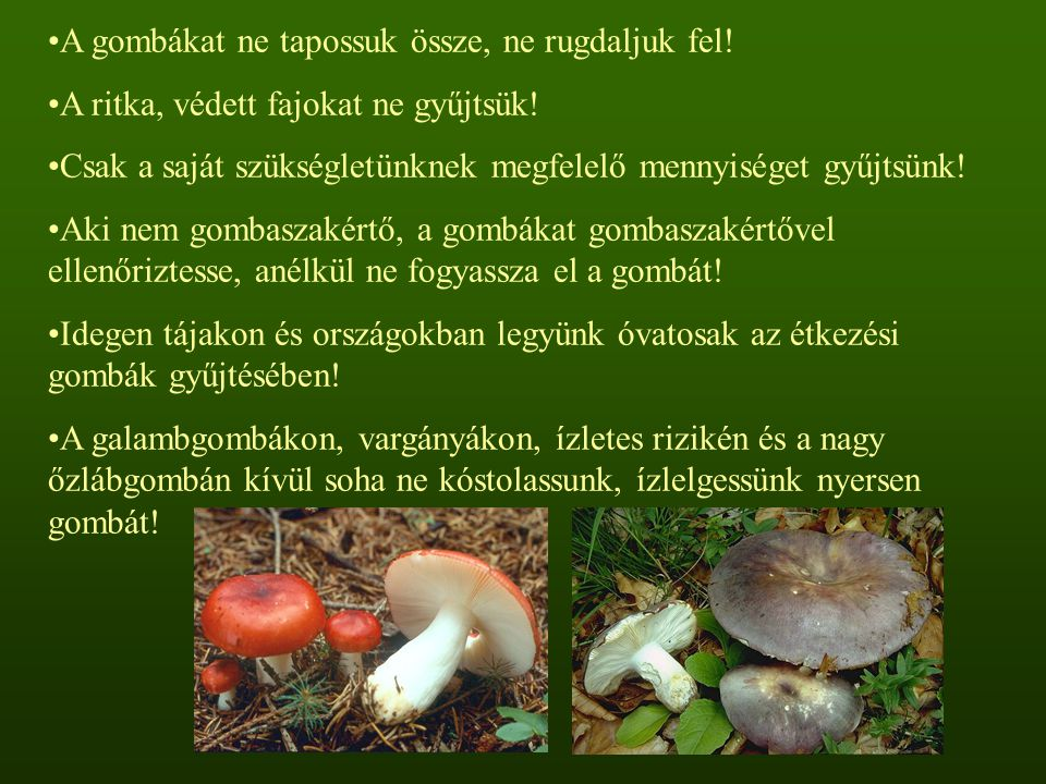 A gombákat ne tapossuk össze, ne rugdaljuk fel!