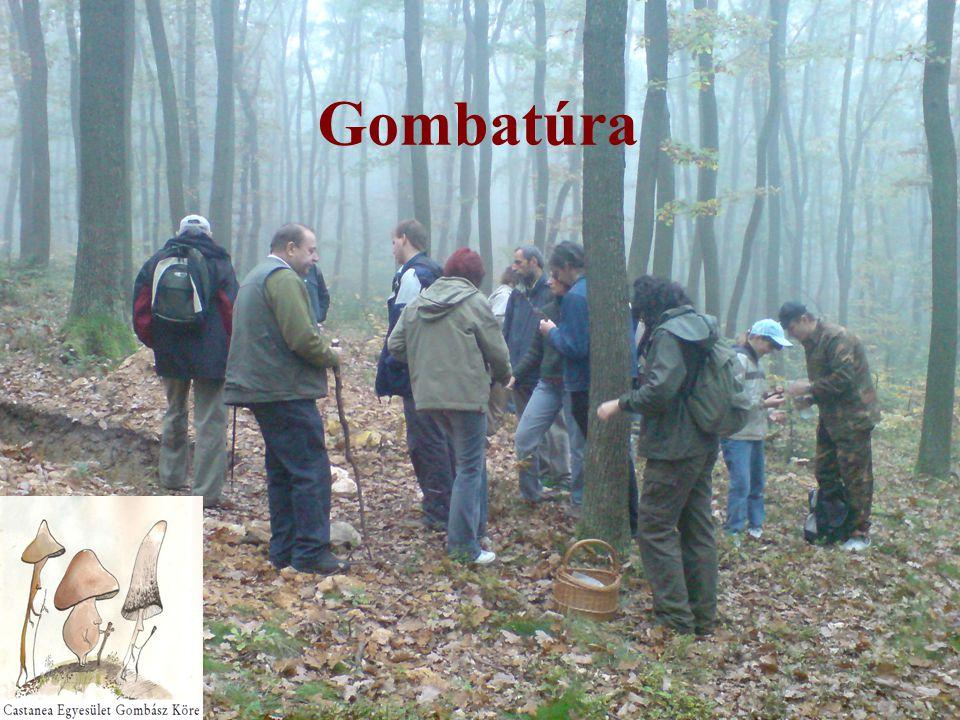 Gombatúra