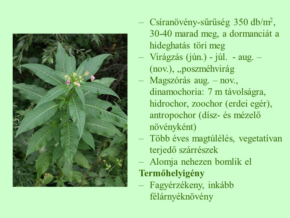 Csíranövény-sűrűség 350 db/m2, 30-40 marad meg, a dormanciát a hideghatás töri meg
