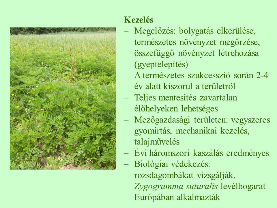 Kezelés Megelőzés: bolygatás elkerülése, természetes növényzet megőrzése, összefüggő növényzet létrehozása (gyeptelepítés)