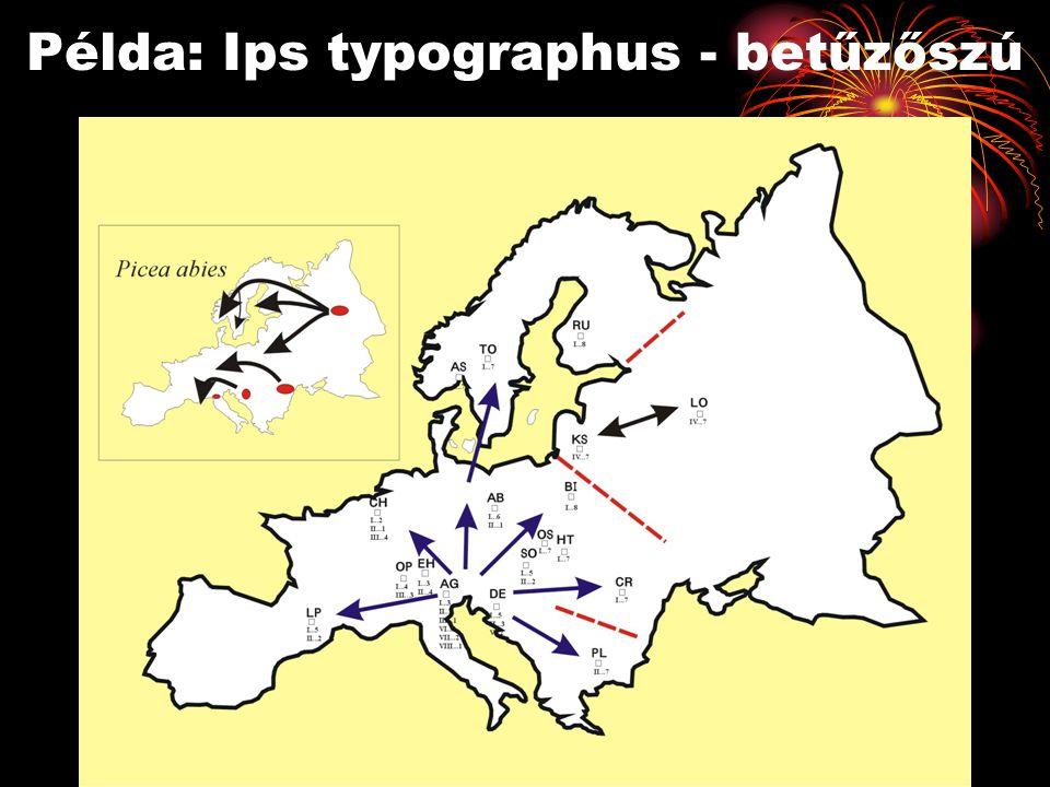 Példa: Ips typographus - betűzőszú